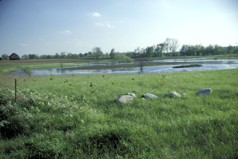 Eel River Bog