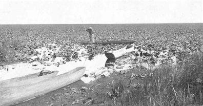 Ten thousand acres of wokas, Klamath Marsh, Oregon. An Indian woman is poling a dugout.