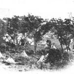 A camp in a cottonwood grove. Photograph not identified, but probably made by J. D. Hutton