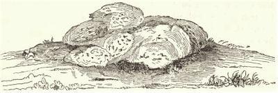 Oneida Stone