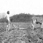 Eastern Cherokee, plowing with 1 steer