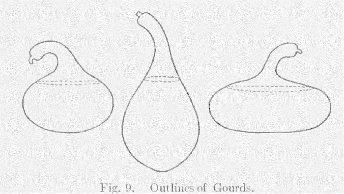 Fig. 9. Outlines of Gourds