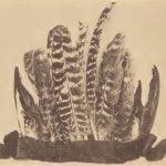 Mattaponi feather headdress.